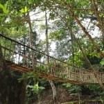 Rope walkway through the treetops — Stock Photo