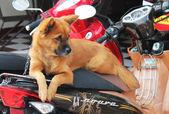 Dog driver. — Stock Photo