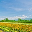 Biei and Furano flower fields, Hokkaido, Japan — Stock Photo