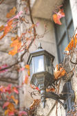 Lamp amidst autumn leaves — Zdjęcie stockowe