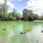 Stadtpark, Vienna — Zdjęcie stockowe
