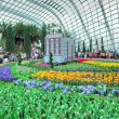 Постер, плакат: Tulip Mania Gardens by the Bay