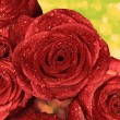 Red wet roses with water droplets — Stock Photo