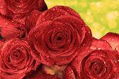 Rosas rojas mojadas con las gotas de agua — Foto de Stock