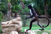 Spider monkey — Stockfoto