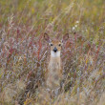 Deer fawn — Stock Photo #13119062