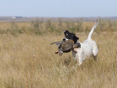Dog with a Grouse — Stock Photo
