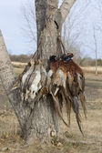 Pheasants and Grouse — Stock Photo