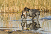 Duck Hunting — Stock Photo