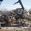 Stock Photo: Logging Pine and Aspen