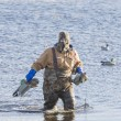 Putting out Duck Decoys — Stock Photo