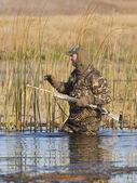 Cazador de pato — Foto de Stock