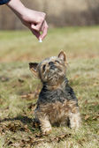 Dog getting a treat — Stock Photo