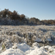 Frozen Wetland — Stock Photo #39088111