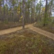 Crossroads in forest — Stockfoto #13620075