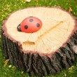 Stock Photo: Adybug autumn tree stump