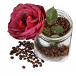 Rose in jar with coffee — 图库照片