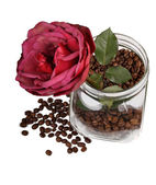 Rose in jar with coffee — Stock Photo