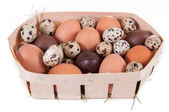 Chicken, quail and chocolate eggs — Foto Stock