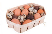Chicken, quail and chocolate eggs — Stockfoto