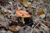 Oisonous but beautiful fly agaric — Stock Photo