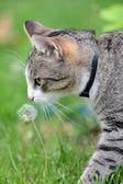 Kot - romantyczne — Zdjęcie stockowe