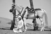 アラブ馬の美しさ — ストック写真