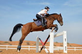 Jumping Horse — Stock Photo