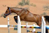 Jumping Horse — Stock Photo