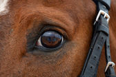 Sport horse — Stock Photo