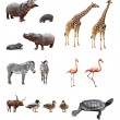 Zoo animals — Stockfoto