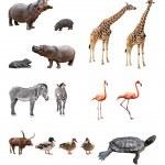animales del zoológico — Foto de Stock