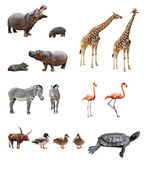 Zoo animals — Stock Photo