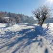 Frozen trees and road in a field, with great shadows — Stock Photo