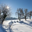 Snowy landscape scenery with flat county, trees and road — Stock Photo
