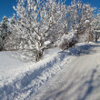 Snow-covered road in forest — Stock Photo