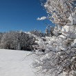 Winter snow covered trees on blue sky background — Stock Photo