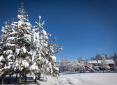 Snow landscape with village in background, beautiful sunny day — Stock Photo