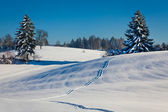 Winter landscape with snowy trees and path in snow — Stock Photo