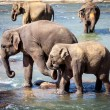 Older Elephant Kicking Young Elephant While Bathing in River — Stock Photo