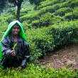 Tea Picking in Sri Lankan Mountains — Stock Photo