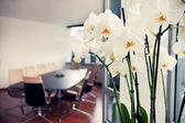 White orchids in conference room, empty office — Stock Photo