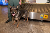 Customs officer and his dog waiting for drugs check on Ljubljana — Foto Stock