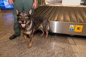 海关官员和他的狗等待药物检查在卢布尔雅那 — 图库照片