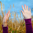 Stock Photo: Hands of a young girl in the wheet field