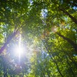Stock Photo: Sun shining through treetops