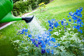 Watering flowers on garden, with green watering can — Stock Photo