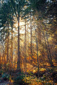 Sun light rays through autumn trees — Photo