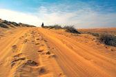 Two unidentified runners running in desert in sunrise — Stock Photo
