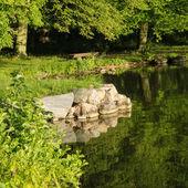 Quiet Summer Morning at the lake at the Lake — Stock Photo